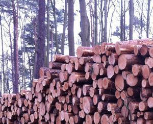 Россия увеличивает экспорт лесопромышленной продукции